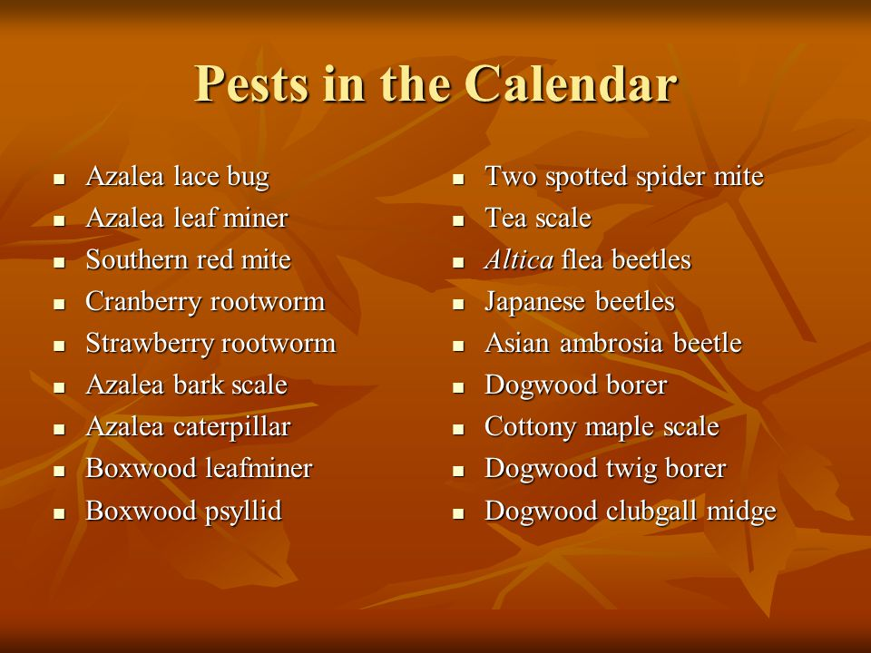 Pests in the Calendar Citrus whitefly Citrus whitefly Cottony cushion scale Cottony cushion scale Holly leafminer Holly leafminer Euonymus scale Euonymus scale Florida wax scale Florida wax scale Two lined spittlebug Two lined spittlebug Spruce spider mite Spruce spider mite Two spotted spider mite Two spotted spider mite Juniper scale Juniper scale Flat headed apple tree borer Flat headed apple tree borer Aphids Aphids Orange striped oakworm Orange striped oakworm Obscure scale Obscure scale Lecanium scale Lecanium scale Maple bladder gall Maple bladder gall