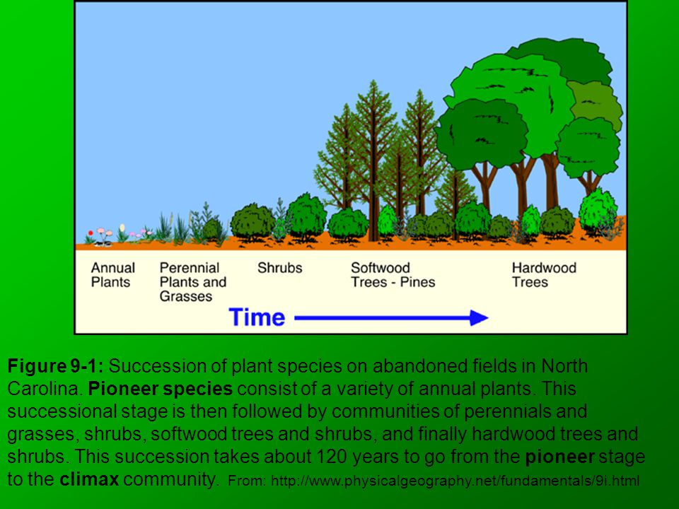 Figure 9-1: Succession of plant species on abandoned fields in North Carolina. Pioneer species consist of a variety of annual plants. This successiona