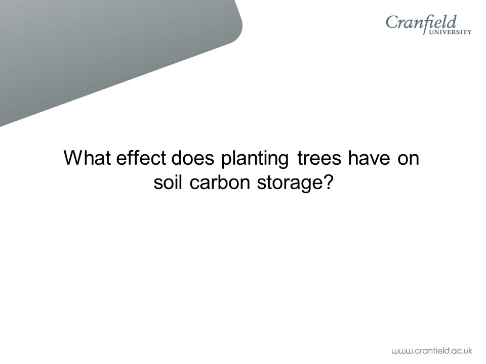 What effect does planting trees have on soil carbon storage?
