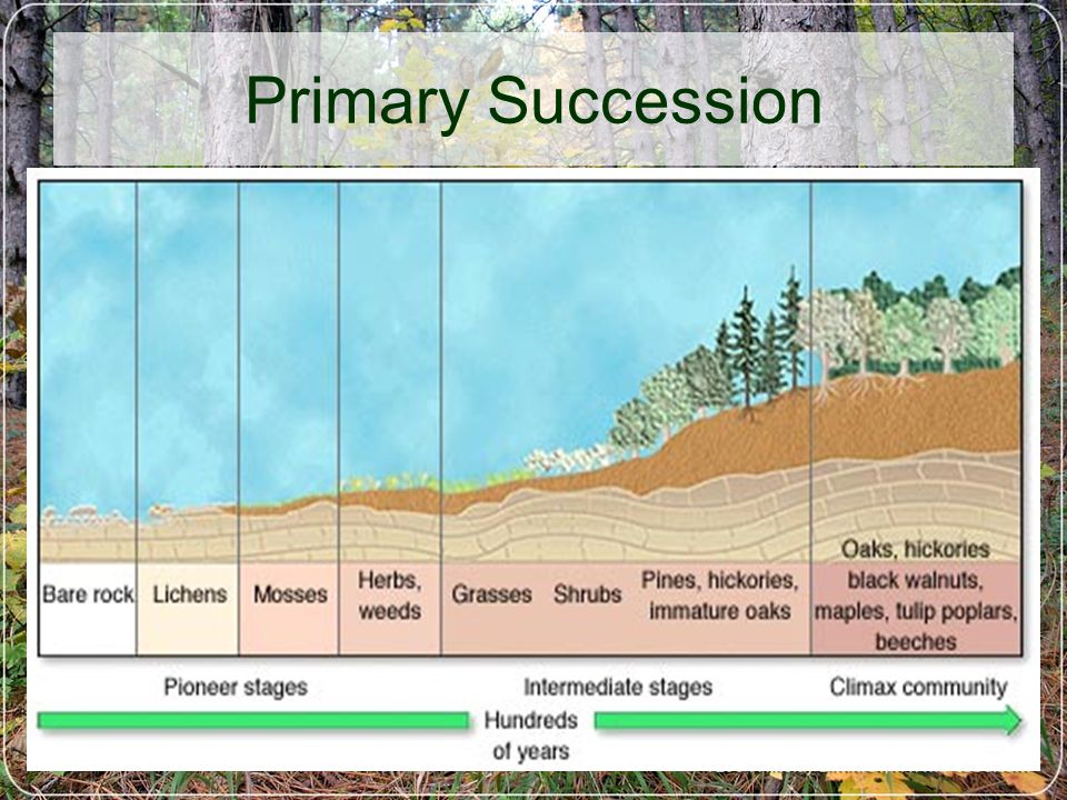 6/5/03M-DCC / PCB 2340C13 Primary Succession
