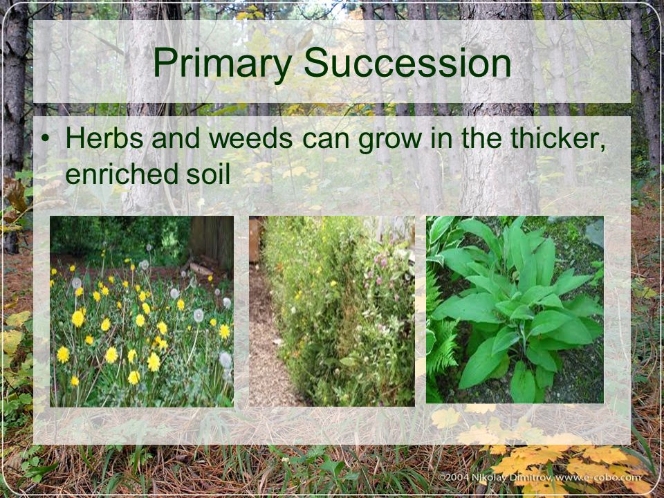 Herbs and weeds can grow in the thicker, enriched soil