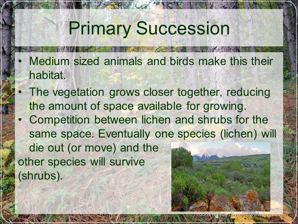 Primary Succession Medium sized animals and birds make this their habitat.