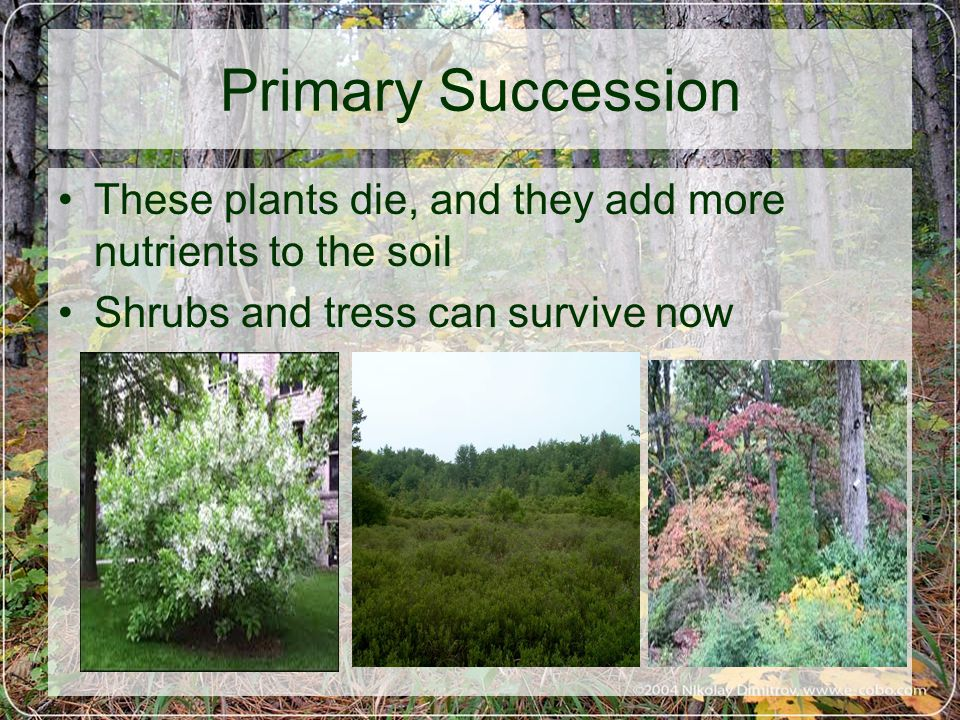 These plants die, and they add more nutrients to the soil Shrubs and tress can survive now