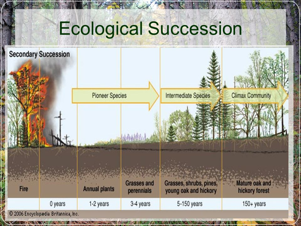 Ecological Succession N