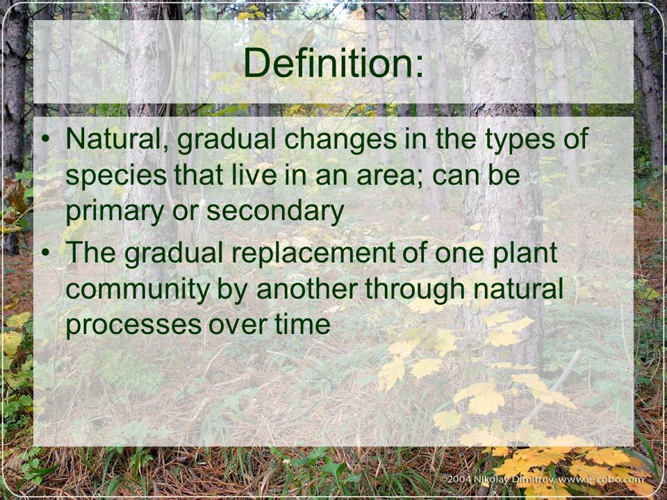 Definition: Natural, gradual changes in the types of species that live in an area; can be primary or secondary The gradual replacement of one plant community by another through natural processes over time