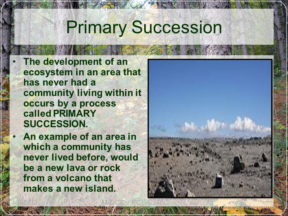 Primary Succession Begins in a place without any soil –In the beginning there is only rock, sand, volcanic ash.