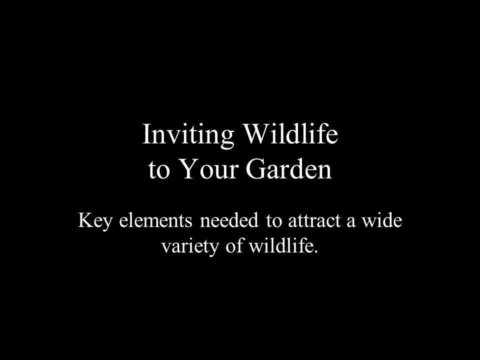 NWF Certified Wildlife Habitat Water Food Cover Place to Raise Young Sustainable Gardening