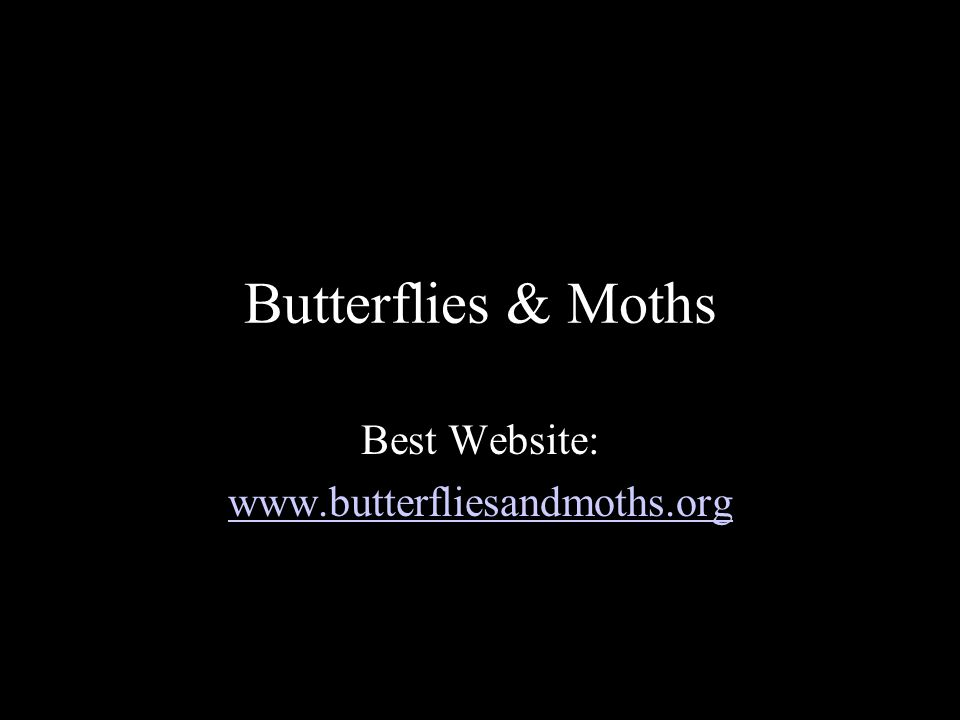 Butterflies & Moths Protected sunny, non-windy area Low traffic Specific Host Plants for caterpillars* Nectar Plants for adults* Boggy puddles Citrus wedges/nectar feeders