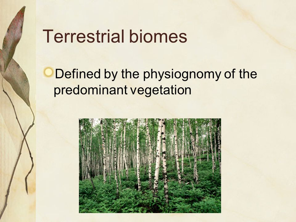 Terrestrial biomes Defined by the physiognomy of the predominant vegetation