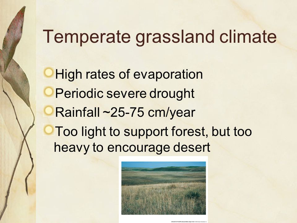 Temperate grassland climate High rates of evaporation Periodic severe drought Rainfall ~25-75 cm/year Too light to support forest, but too heavy to encourage desert