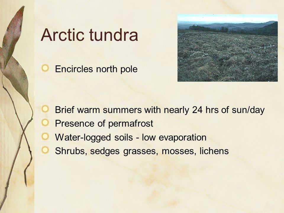 Arctic tundra Encircles north pole Brief warm summers with nearly 24 hrs of sun/day Presence of permafrost Water-logged soils - low evaporation Shrubs, sedges grasses, mosses, lichens