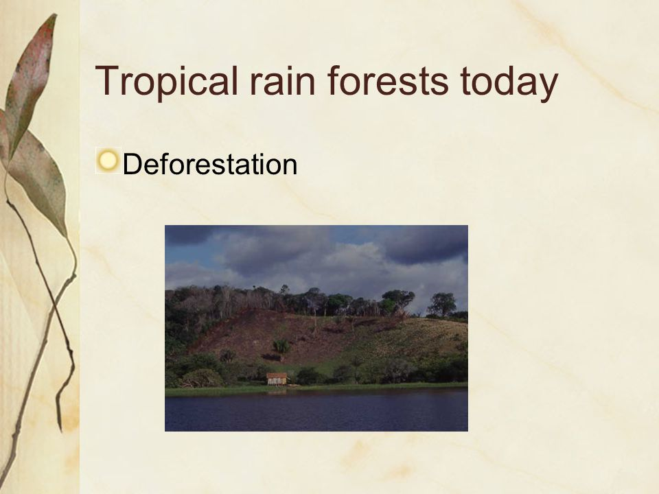 Tropical rain forests today Deforestation