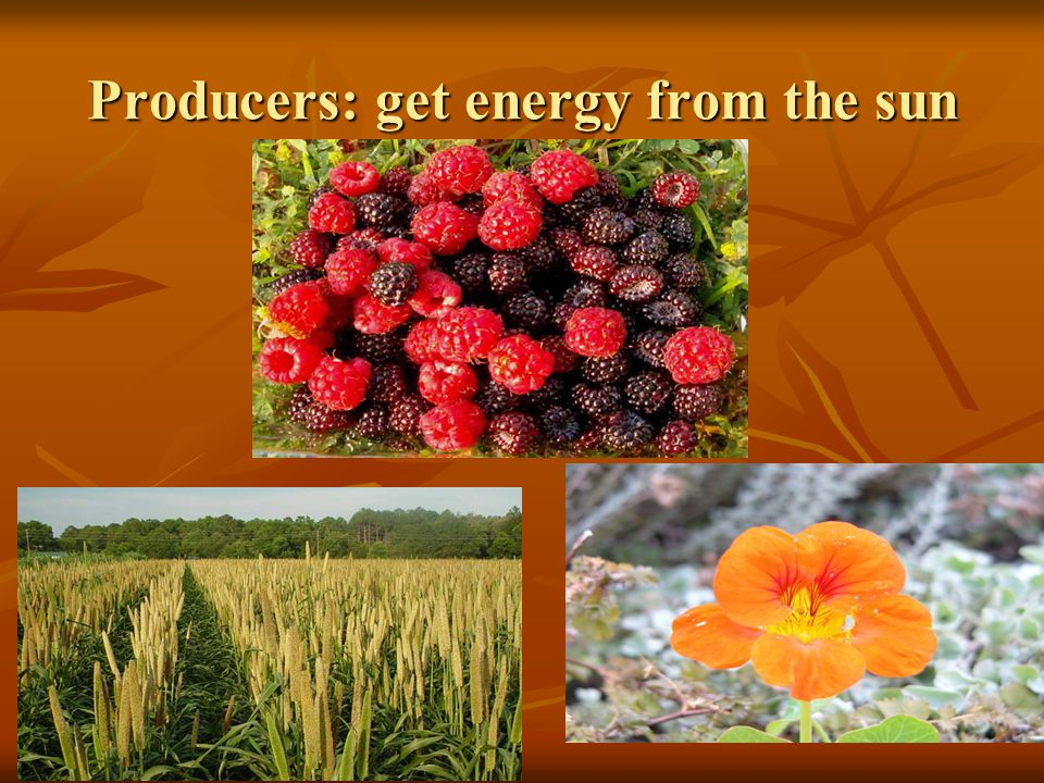 Consumers: get energy from producers