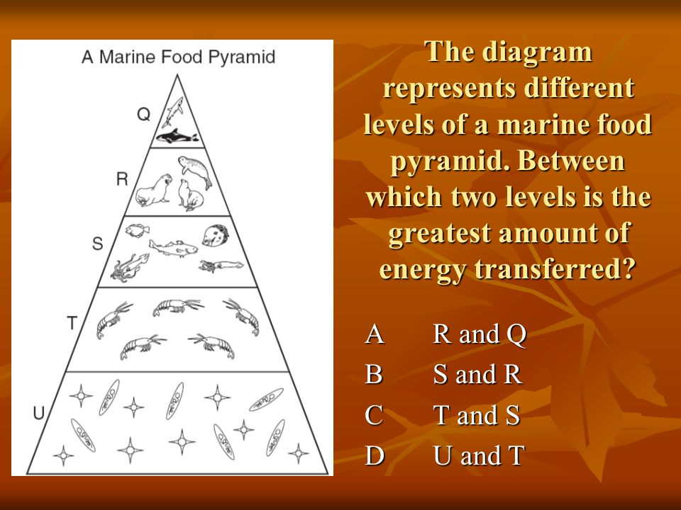 According to this food web, which of the following are omnivores.
