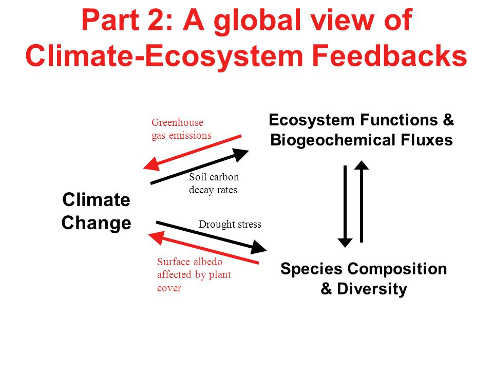 Part 2: A global view of Climate-Ecosystem Feedbacks Climate Change Species Composition & Diversity Ecosystem Functions & Biogeochemical Fluxes Surfac