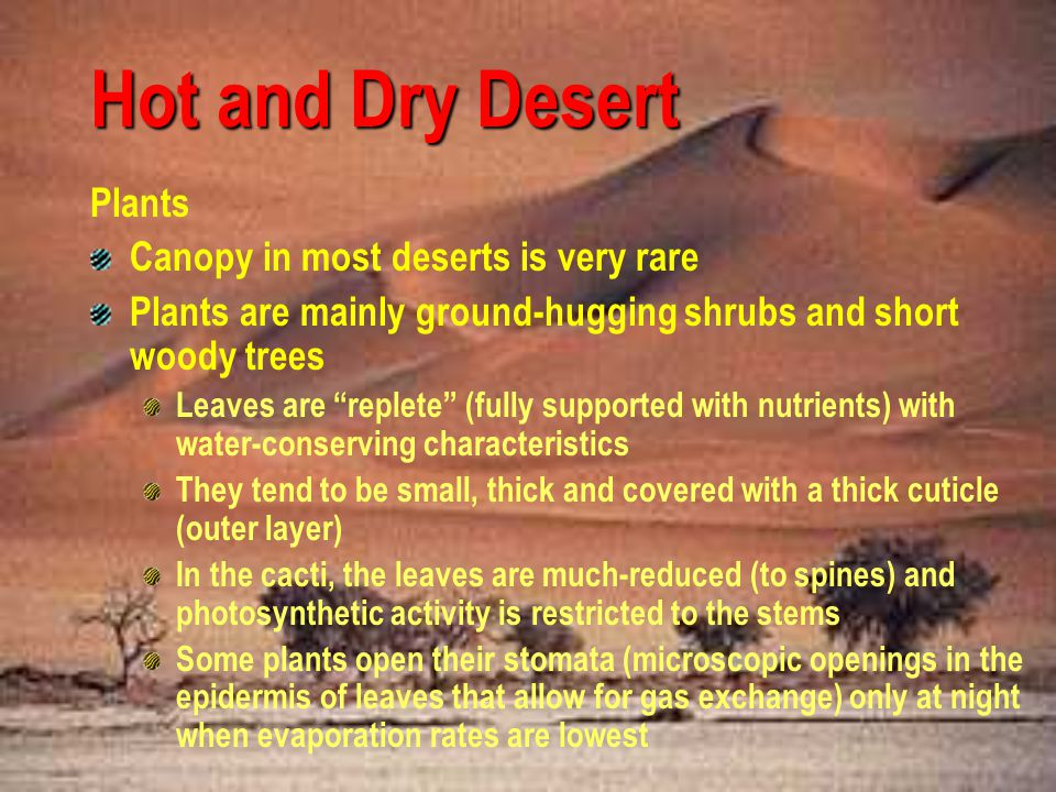 Hot and Dry Desert Yuccas Ocotillo Turpentine bush Prickly Pears False mesquite Sotol Ephedras Agaves Brittlebush