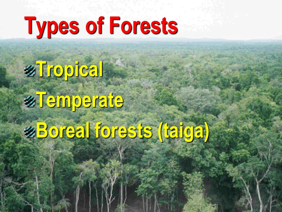Tropical Forests are characterized by the greatest diversity of species occur near the equator, within the area bounded by latitudes 23.5 degrees N and 23.5 degrees S distinct seasonality winter is absent only two seasons are present (rainy and dry) The length of daylight is 12 hours and varies little.