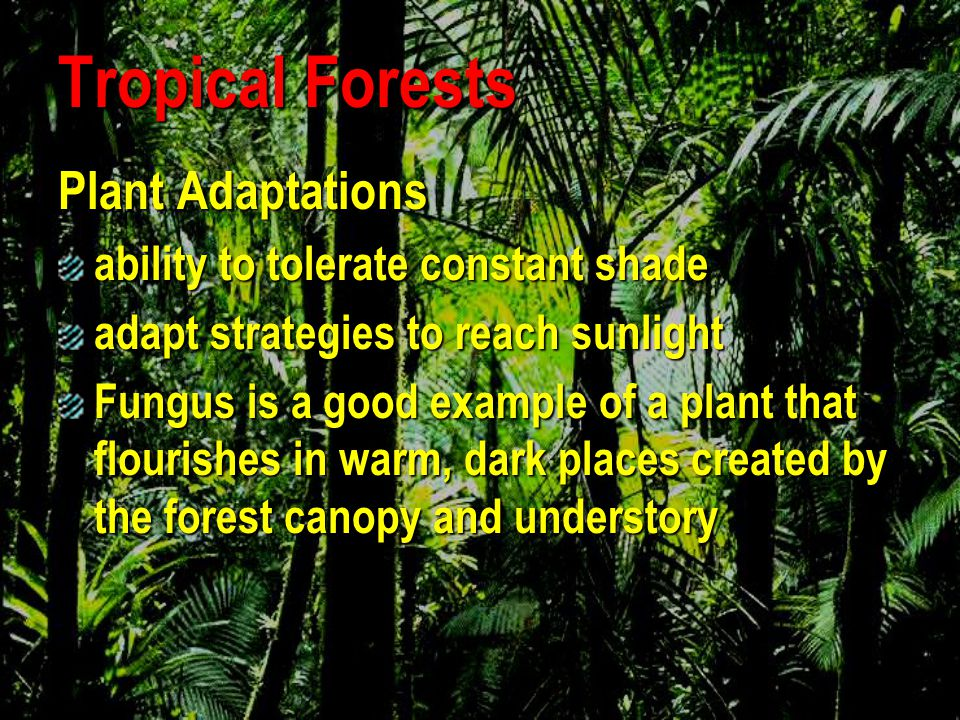 Tropical Forests Lianas Lianas Epiphytes (grow on another plant) Epiphytes (grow on another plant) Ferns Ferns Moss Moss Curare Curare Forest Canopy Palms