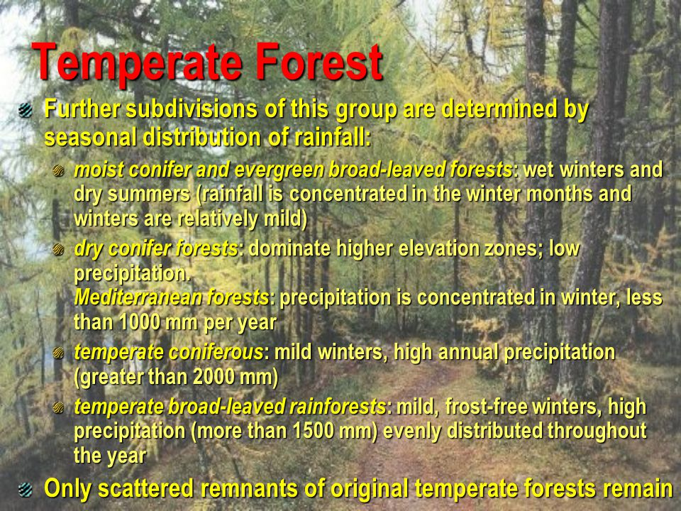 Boreal forests, or taiga represent the largest terrestrial biome Occurs between 50 and 60 degrees north latitudes seasons are divided into short, moist, and moderately warm summers and long, cold, and dry winters length of the growing season in boreal forests is 130 days