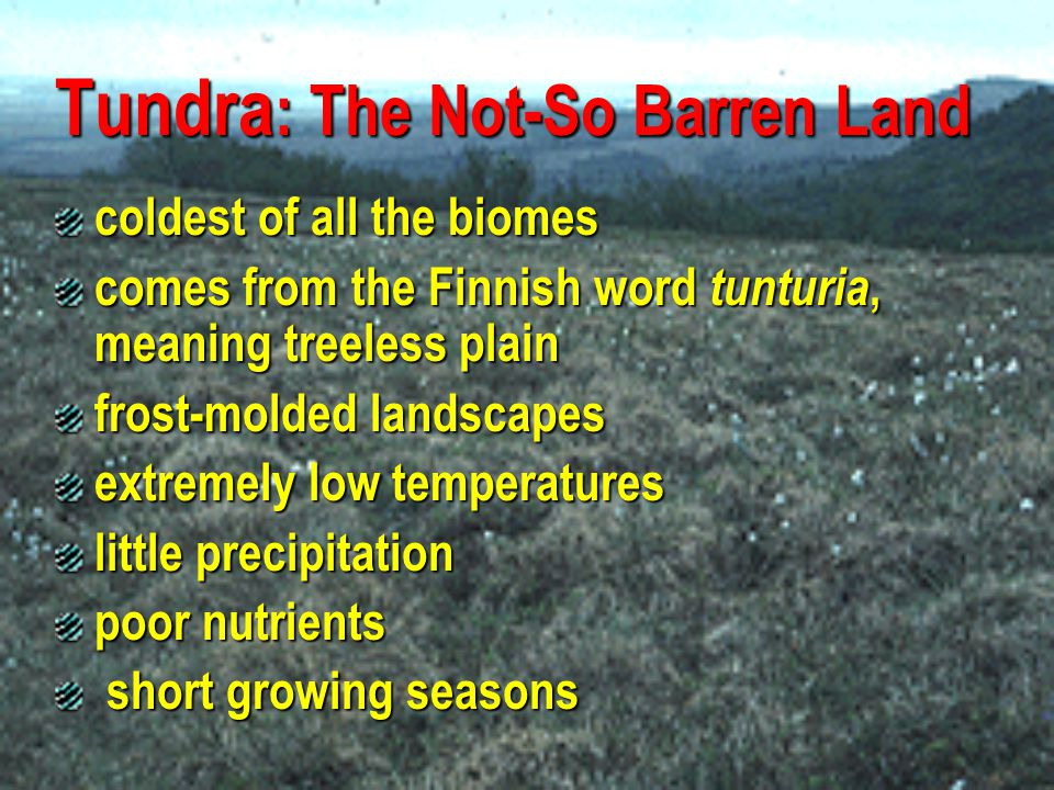 Tundra : The Not-So Barren Land