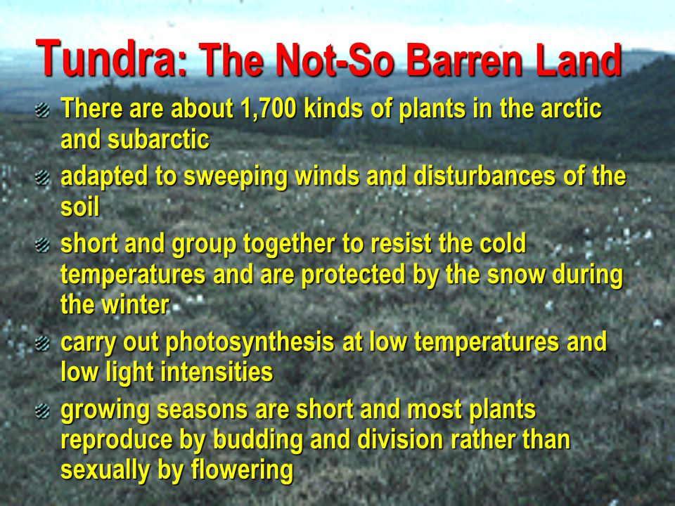 Tundra : The Not-So Barren Land low shrubs, sedges, reindeer mosses, liverworts, and grasses 400 varieties of flowers crustose and foliose lichen