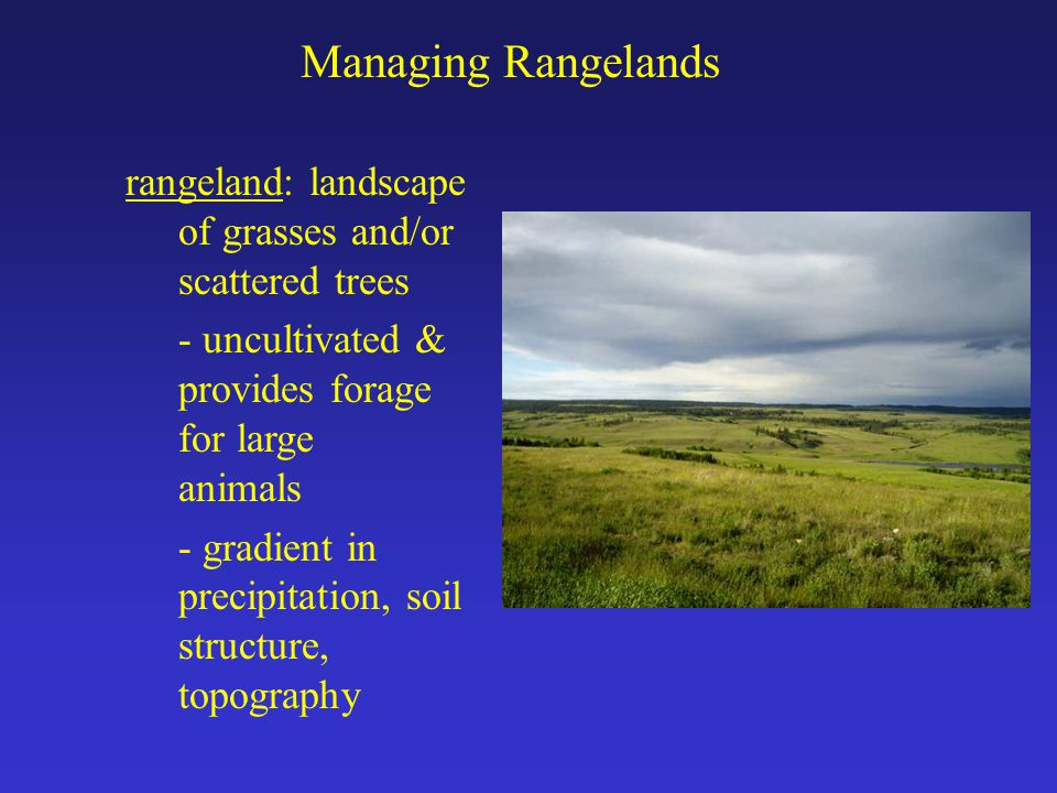 Managing Rangelands rangeland: landscape of grasses and/or scattered trees - uncultivated & provides forage for large animals - gradient in precipitation, soil structure, topography