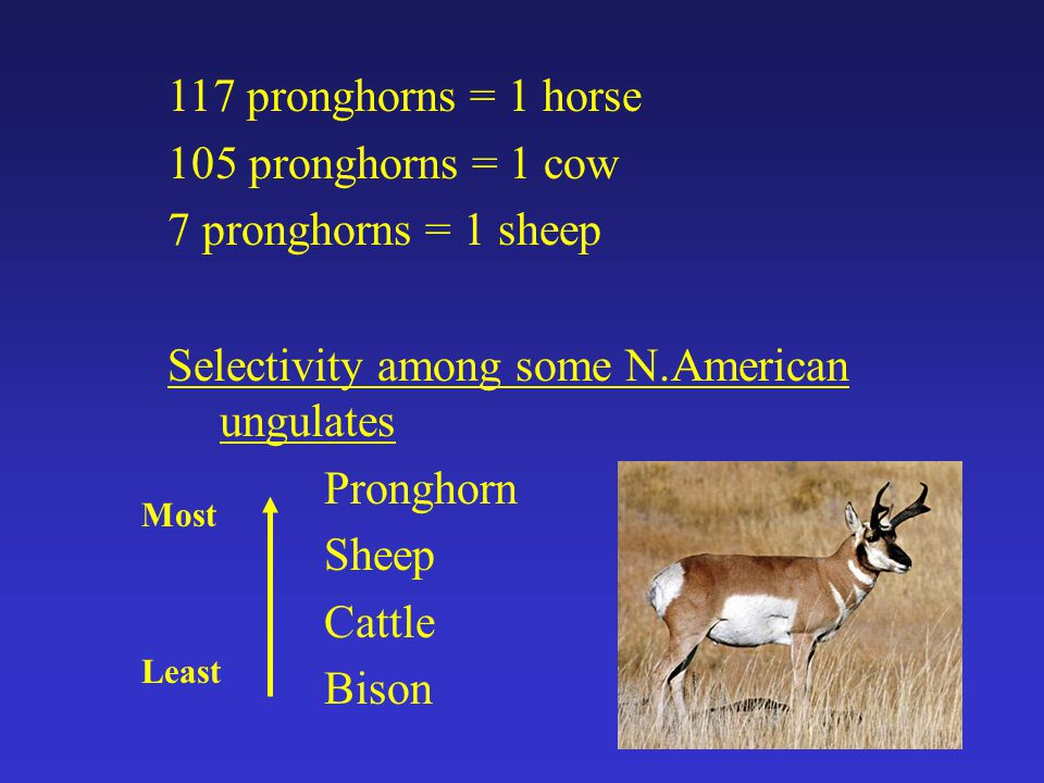 117 pronghorns = 1 horse 105 pronghorns = 1 cow 7 pronghorns = 1 sheep Selectivity among some N.American ungulates Pronghorn Sheep Cattle Bison Least Most