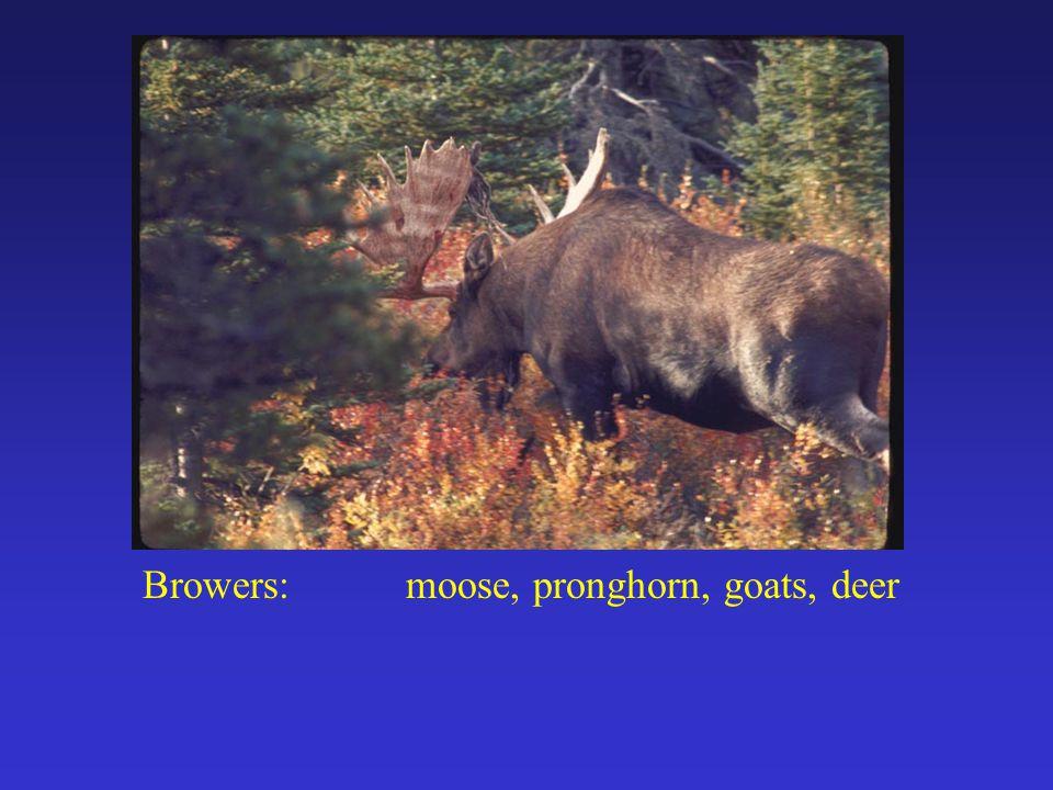 Browers:moose, pronghorn, goats, deer