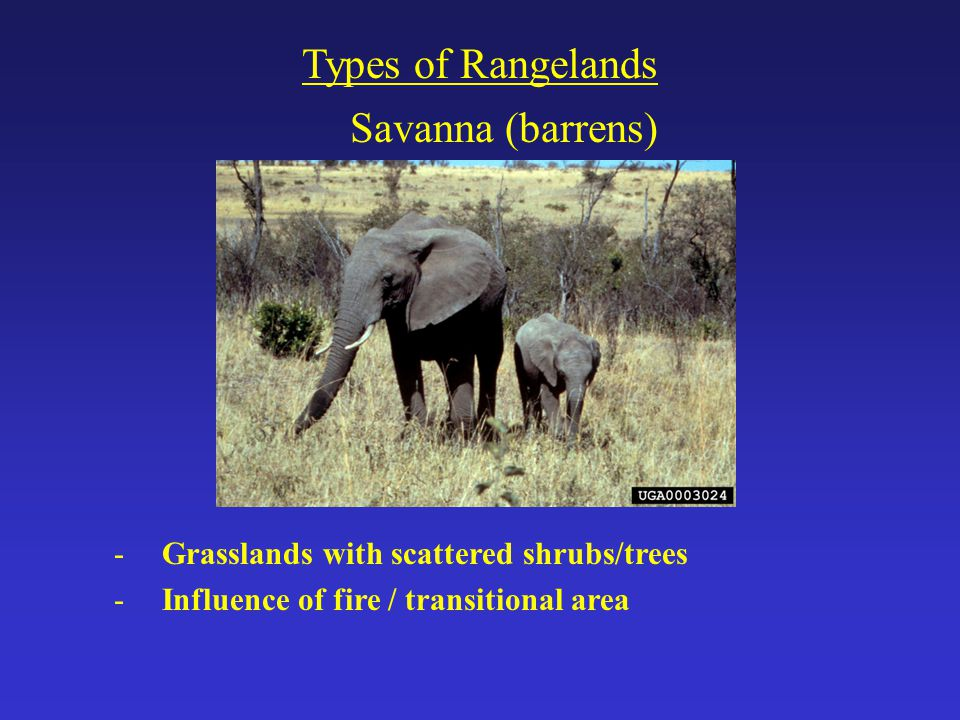 Savanna (barrens) Types of Rangelands -Grasslands with scattered shrubs/trees -Influence of fire / transitional area