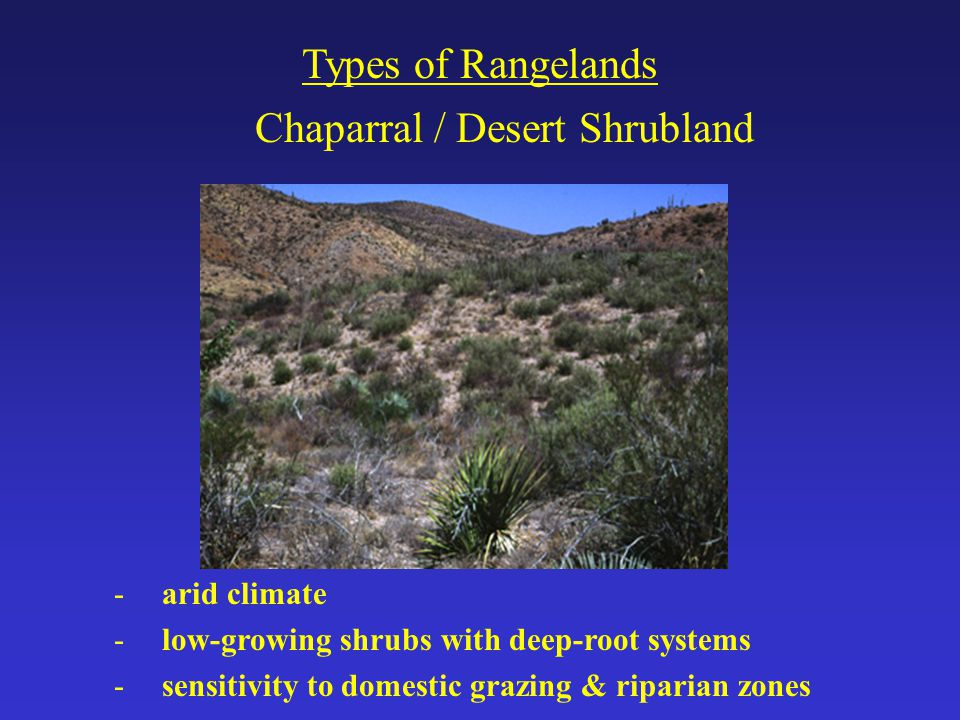 Chaparral / Desert Shrubland Types of Rangelands -arid climate -low-growing shrubs with deep-root systems -sensitivity to domestic grazing & riparian zones