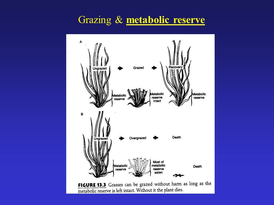 Grazing & metabolic reserve