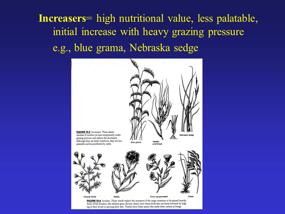 Increasers= high nutritional value, less palatable, initial increase with heavy grazing pressure e.g., blue grama, Nebraska sedge