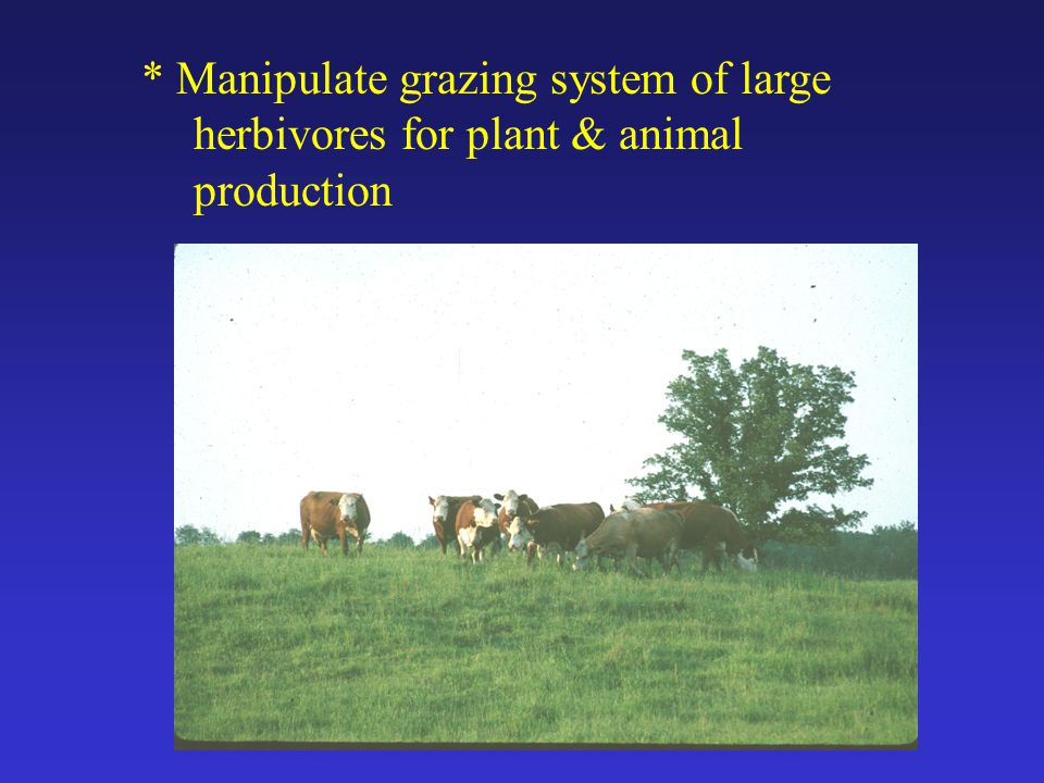 * Manipulate grazing system of large herbivores for plant & animal production