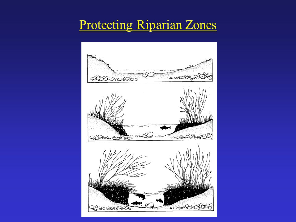 Protecting Riparian Zones