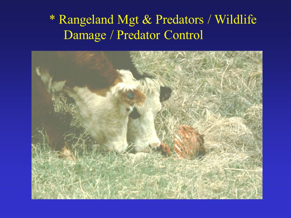 * Rangeland Mgt & Predators / Wildlife Damage / Predator Control
