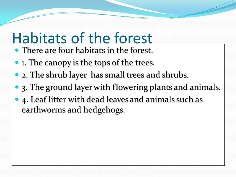 Habitats of the forest There are four habitats in the forest.