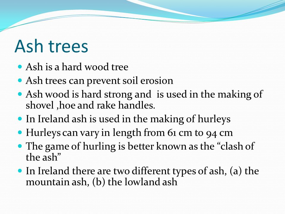 Ash trees Ash is a hard wood tree Ash trees can prevent soil erosion Ash wood is hard strong and is used in the making of shovel,hoe and rake handles.