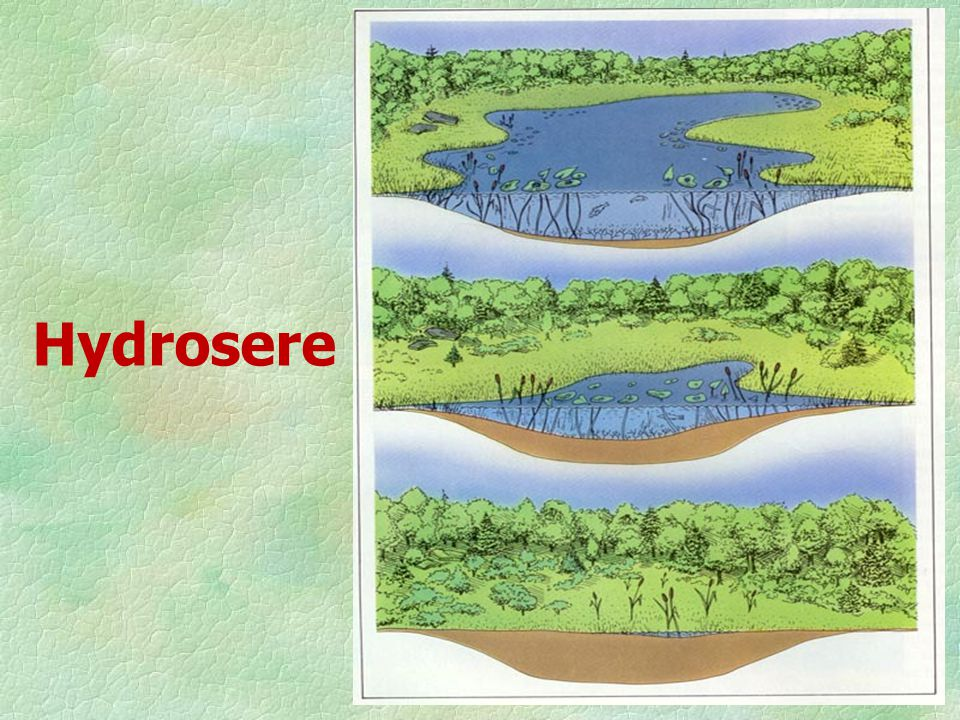 Depending on the substratum and climate, a seral community can be one of the following: 1. Hydrosere: Community in freshwater 2. Xerosere: Community i