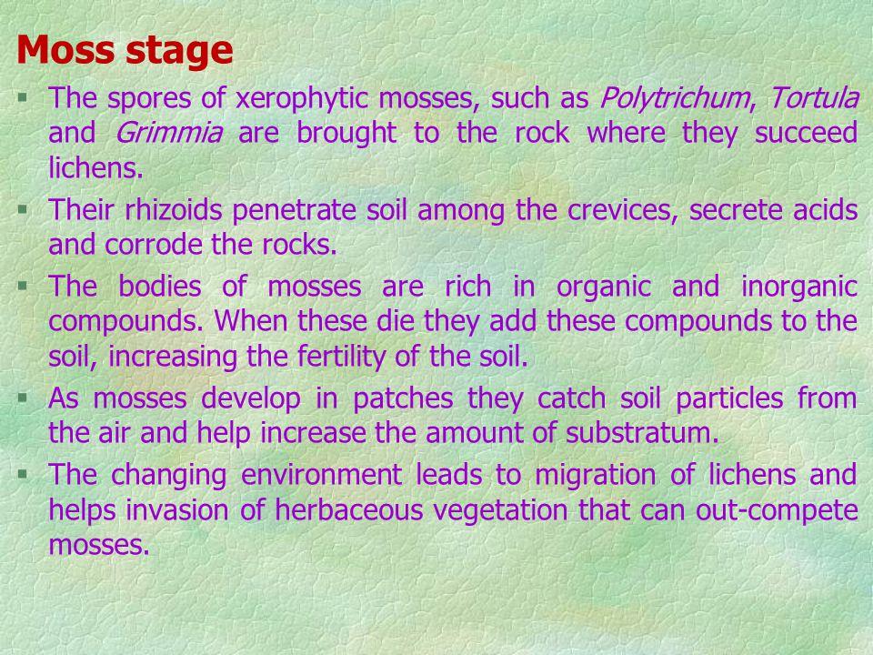 Foliose and fruticose lichen stage §Foliose lichens have leaf-like thalli, while the fruticose lichens are like small bushes. §They are attached to th