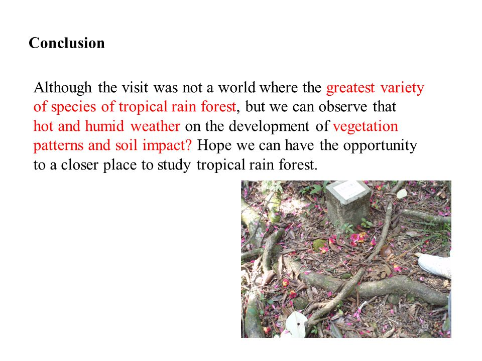 Conclusion Although the visit was not a world where the greatest variety of species of tropical rain forest, but we can observe that hot and humid weather on the development of vegetation patterns and soil impact.