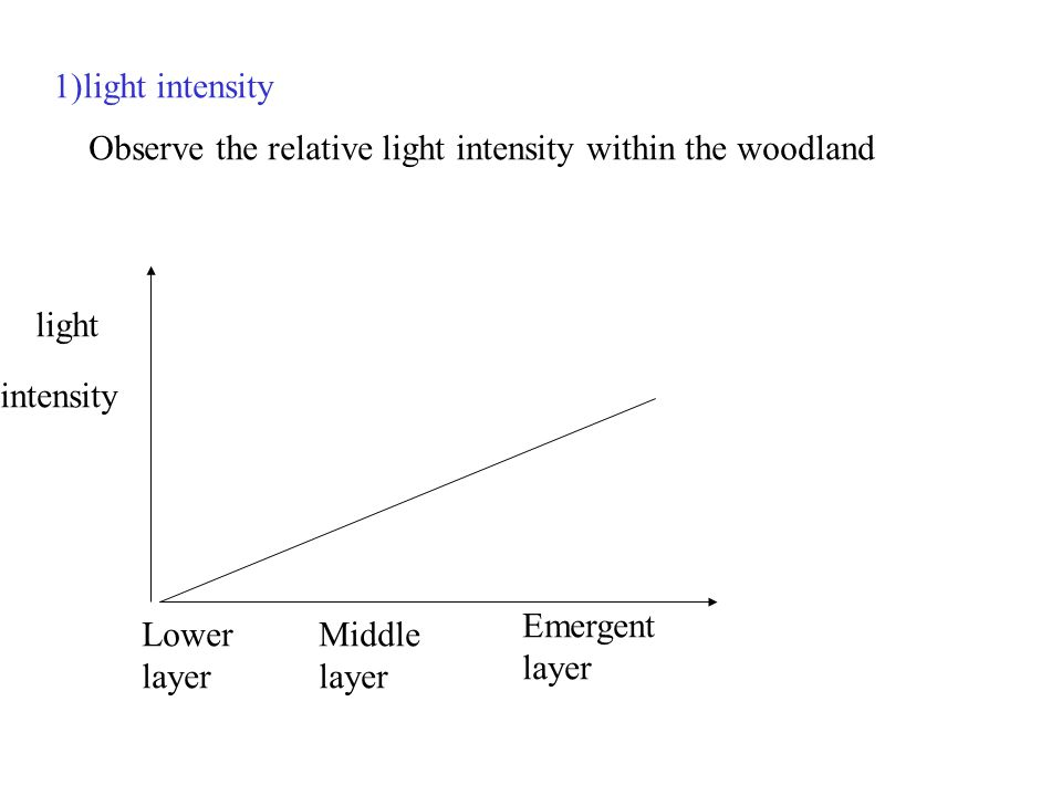 1)light intensity Observe the relative light intensity within the woodland light intensity Lower layer Middle layer Emergent layer