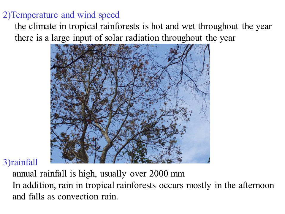 2)Temperature and wind speed the climate in tropical rainforests is hot and wet throughout the year there is a large input of solar radiation throughout the year 3)rainfall annual rainfall is high, usually over 2000 mm In addition, rain in tropical rainforests occurs mostly in the afternoon and falls as convection rain.