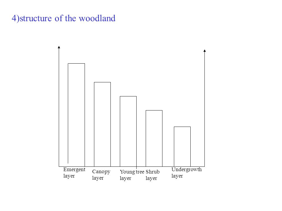 4)structure of the woodland Emergent layer Canopy layer Young tree layer Shrub layer Undergrowth layer