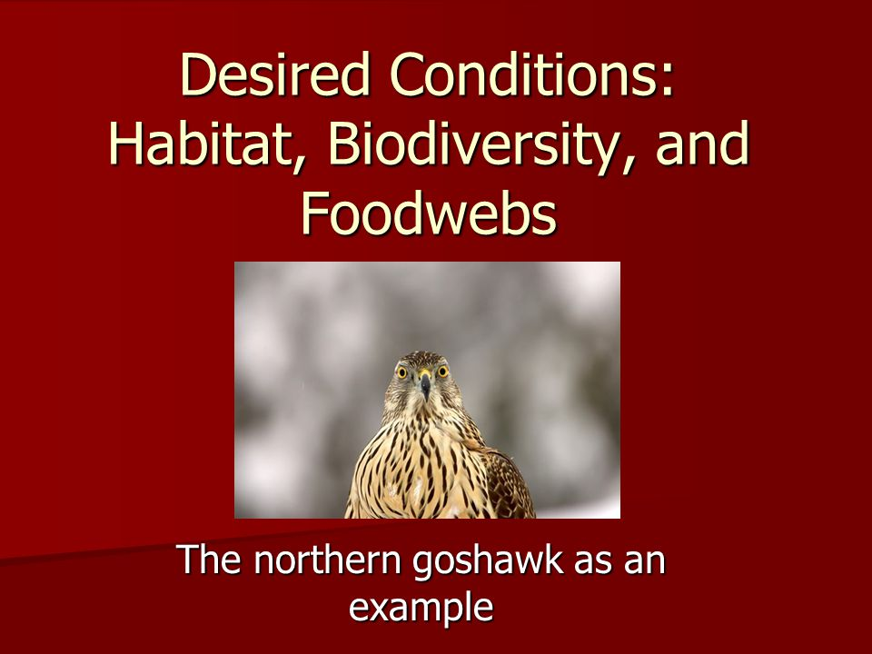 The northern goshawk as an example Desired Conditions: Habitat, Biodiversity, and Foodwebs