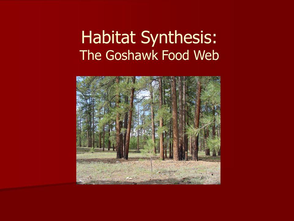 Habitat Synthesis: The Goshawk Food Web