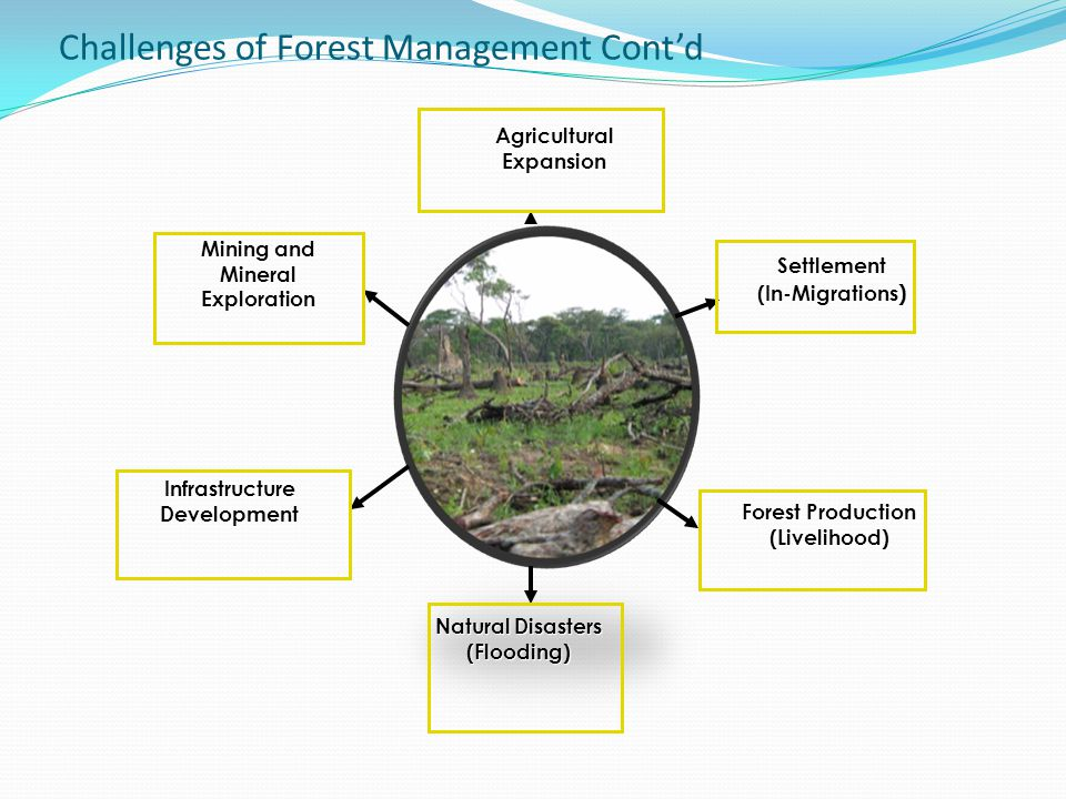 Challenges of Forest Management Cont'd AgriculturalExpansion Settlement (In-Migrations ) Mining and Mineral Exploration Forest Production (Livelihood)