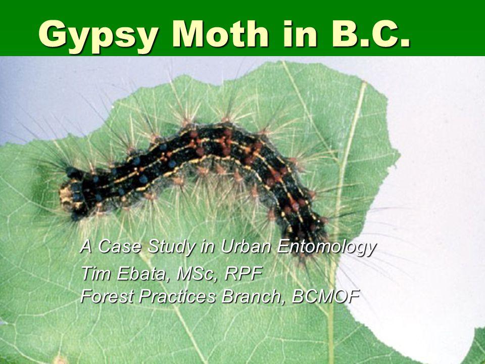 Gypsy Moth in B.C. A Case Study in Urban Entomology Tim Ebata, MSc, RPF Forest Practices Branch, BCMOF