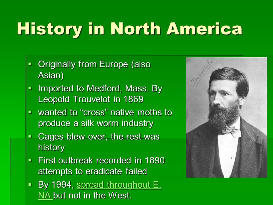 History in North America  Originally from Europe (also Asian)  Imported to Medford, Mass.