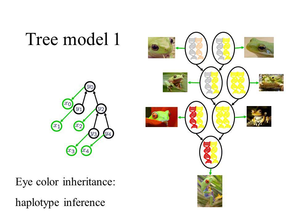 Tree model 1 Eye color inheritance: haplotype inference