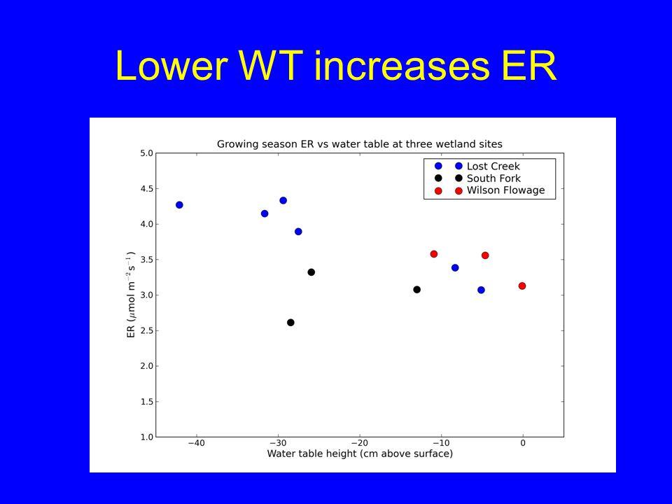 Lower WT increases ER